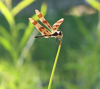 Dragonfly in sun