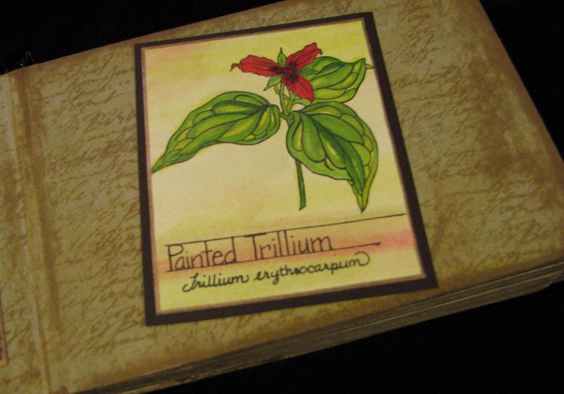 Trilium_garden
